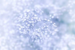 やすらぎの花